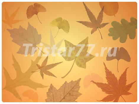 free-autumn-leaves.jpg